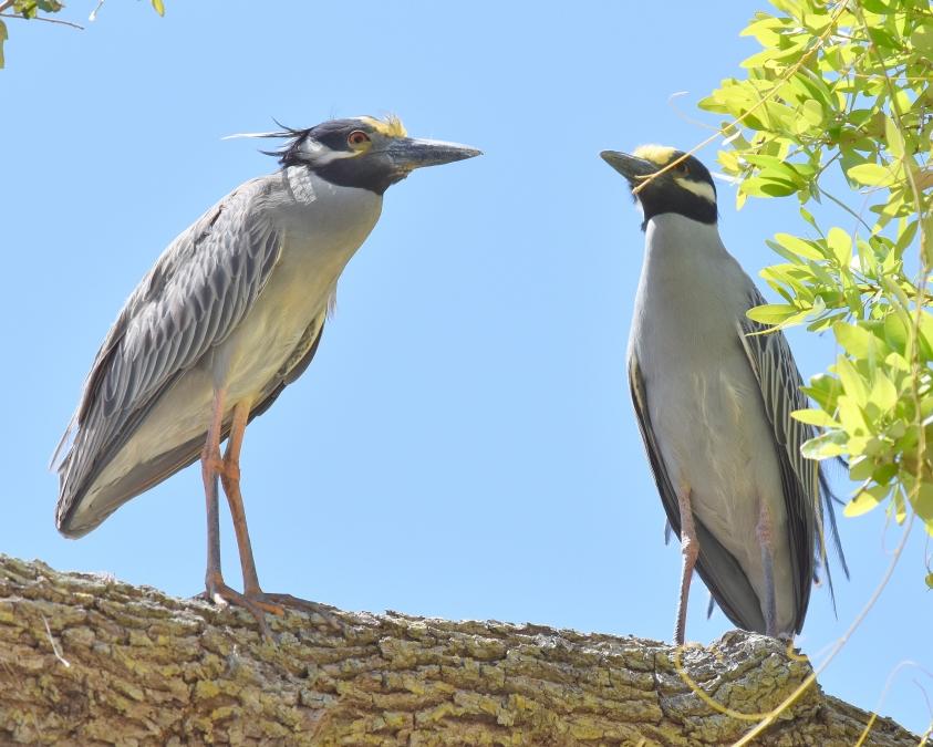 02 Both Birds