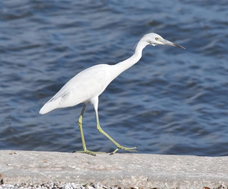 A Bird's Knees